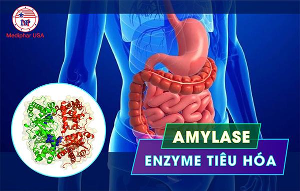 Thật chất Amylase là một loại enzyme tiêu hóa