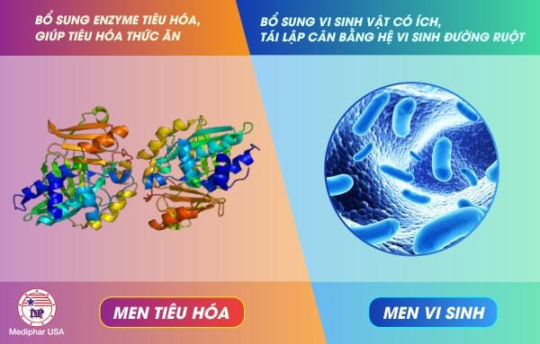 Thật chất men vi sinh và men tiêu hóa là 2 loại men hoàn toàn khác nhau
