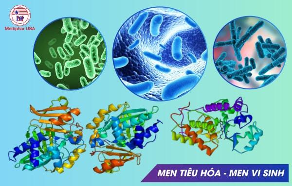 Cần phân biệt men tiêu hóa và men vi sinh để dùng đúng đắn