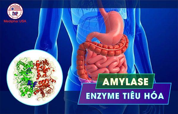 Alpha – Amylase là gì?